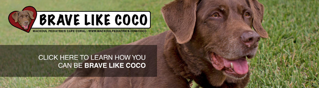 Meet Coco, Our Brave Labordore Dog